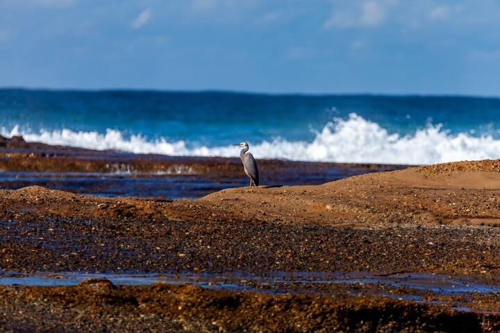 A cormorant surveys the small lagoon