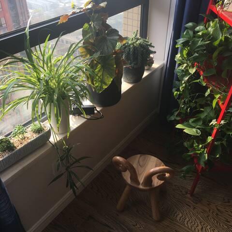 客厅一角 绿植