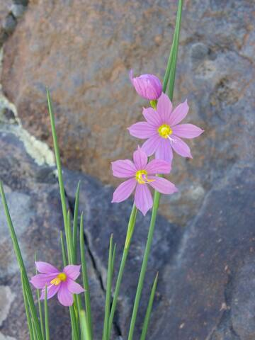Wildflowers in riotous abundance from desert to mountaintop every Spring and well into the Summer