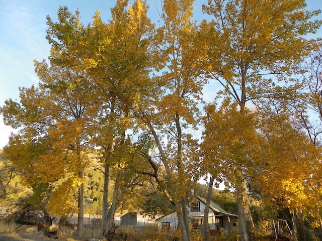 Ancient trees around the Cottage in Fall splendour