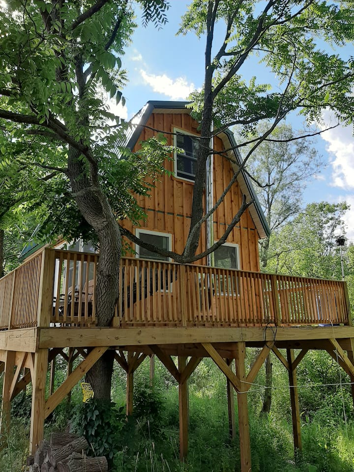 Frog's Leap Tree-House