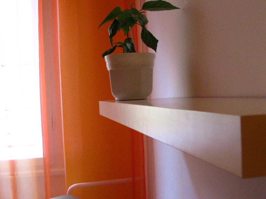 Shelf and plant