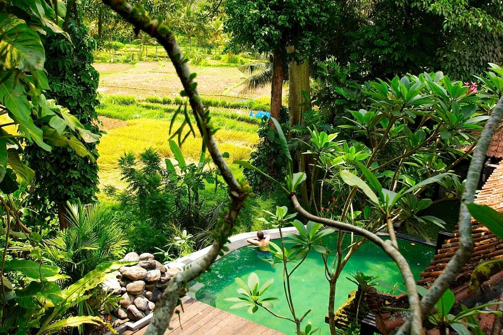The stunning view from the Treetop Suite.