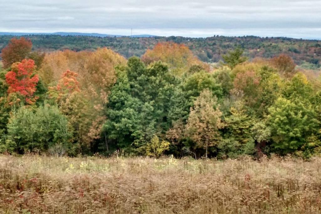 Come see the fall foliage