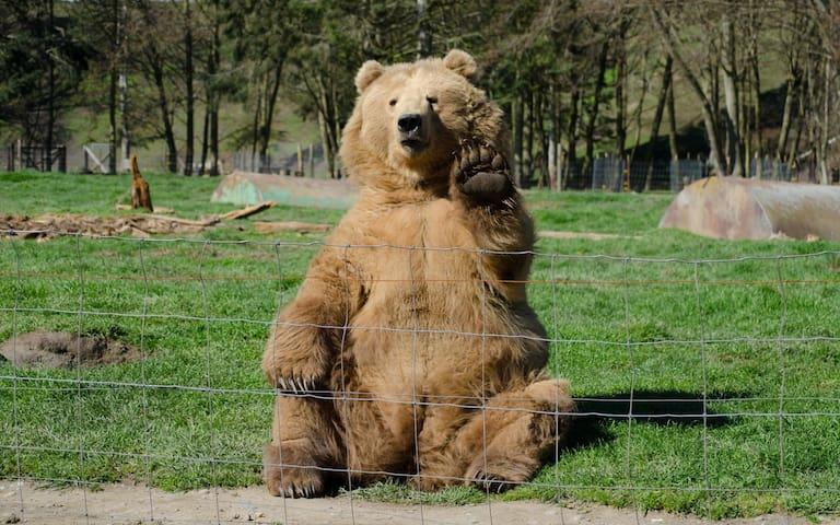 Test fake bear - Jordan Valley - Vila