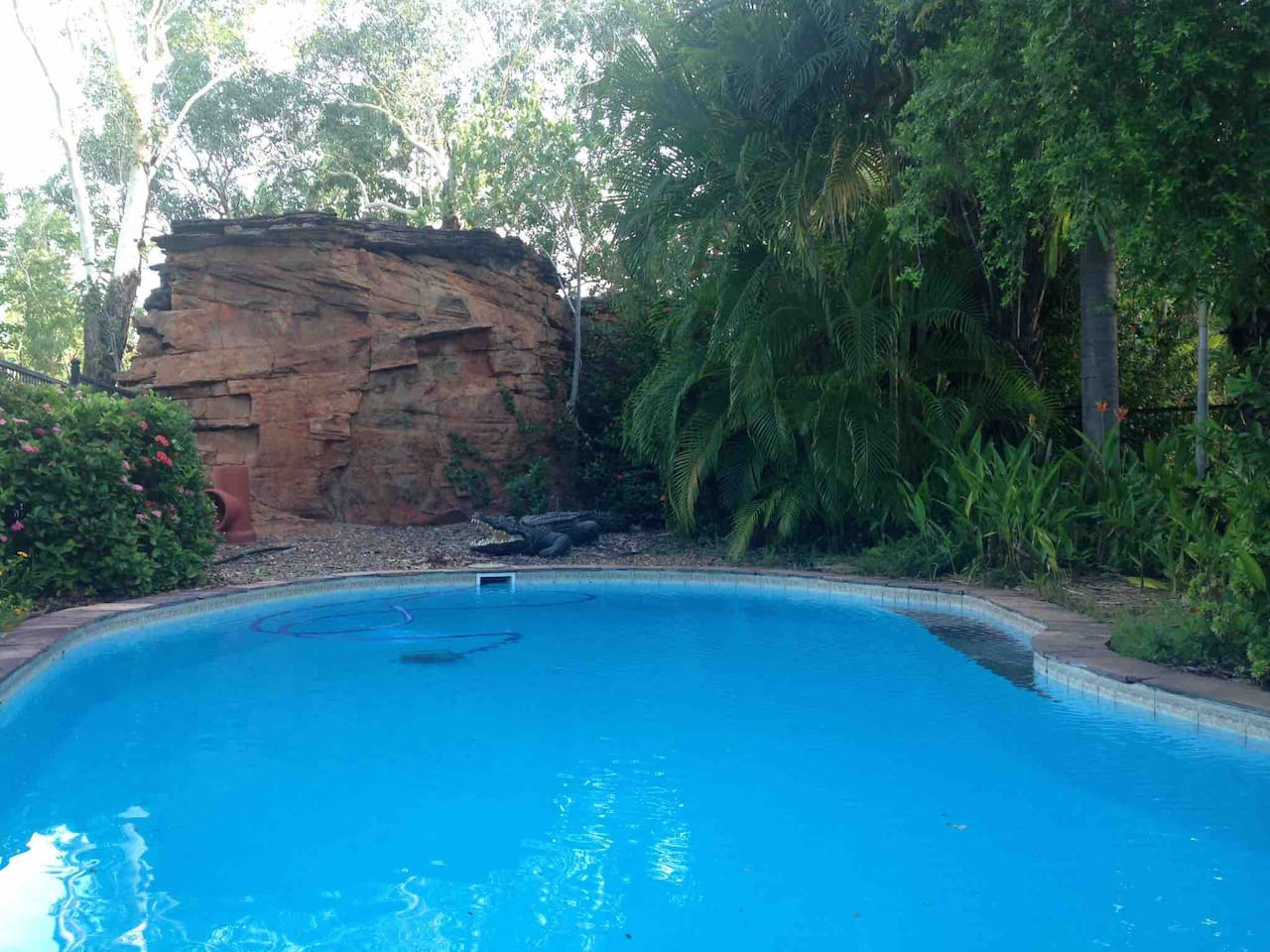 Refreshing pool with a backdrop of Kimberley rock features. Betsy our snappy friend likes sunbathing here.