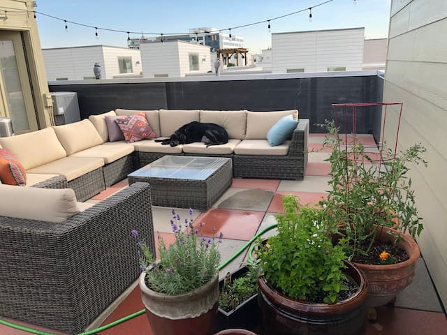 Your Denver home complete w/pup and rooftop views