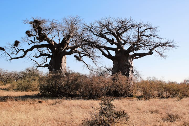 BAOBAB / KREMETART BUSH TRAILS