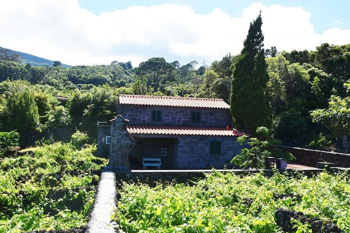 Laurel Villa, Pico, Azores