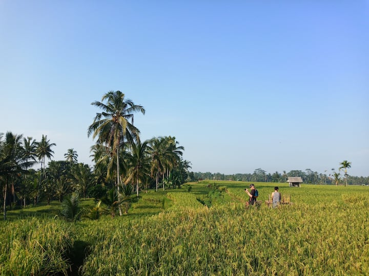 Middle rice paddy