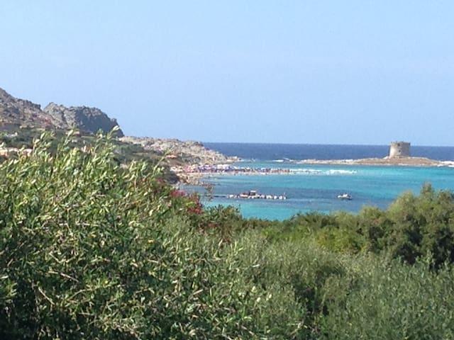 Casa Del Patio - Stintino - Sardegna