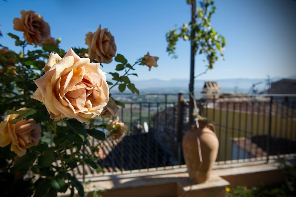 Giardino rose Moka