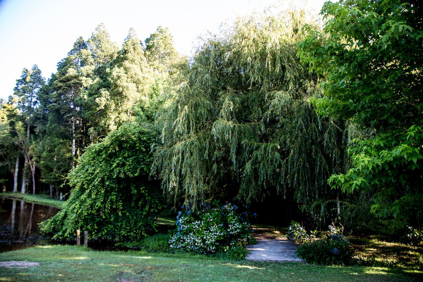 This is a beautiful property,  trees of every variety and a pond, flowers, animals, you will love this stay and experience