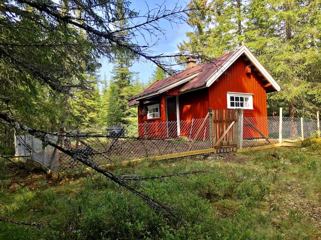 Cabin in the woods.  900m from the road.  no elec.