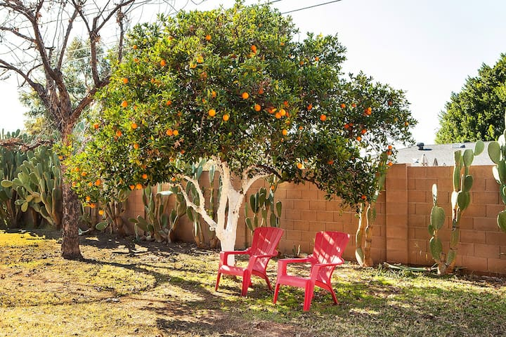 Take some sweet oranges from the tree.