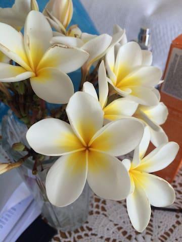 Mourayio ''Jasmine''