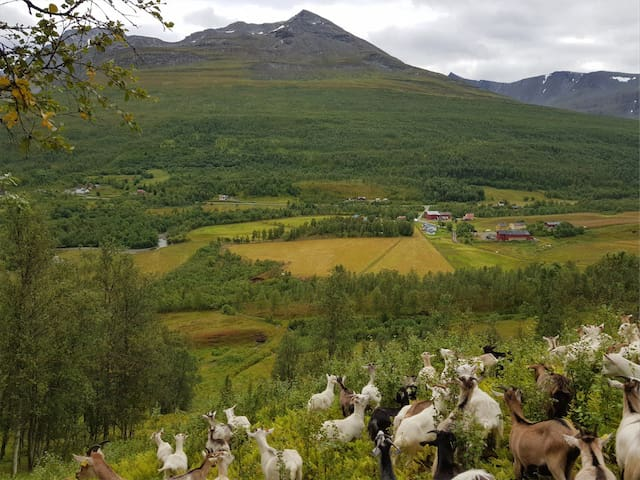 Skogmo Alpine goat farm experience - Triple room 2