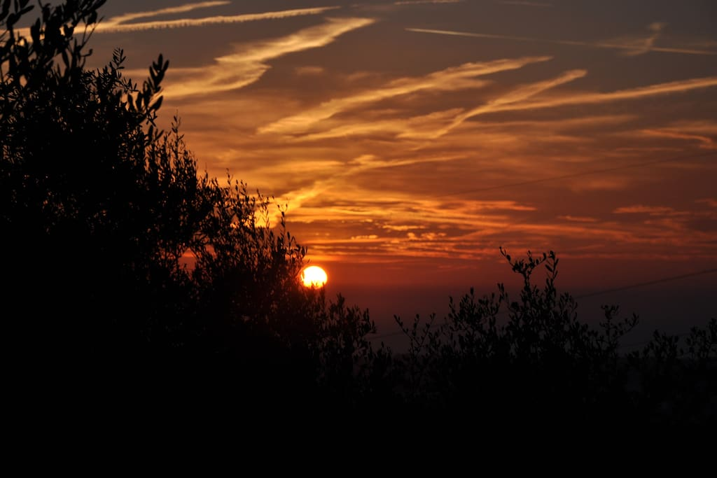 WINTER SUNSET AMONG THE OLIVE TREES