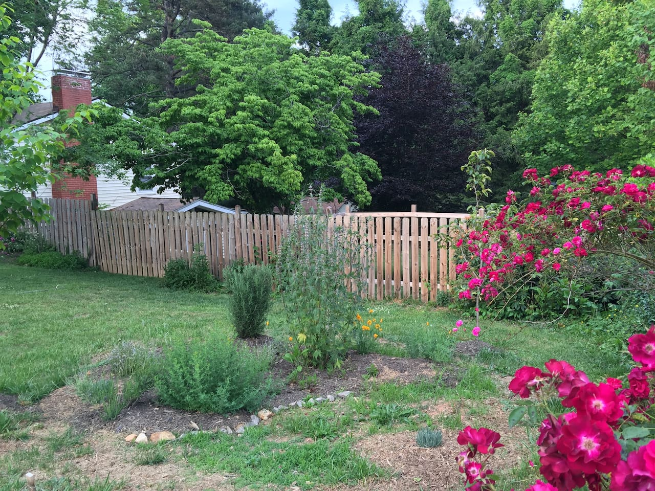 Urban Farm beauty-herbs, flowers, & berries