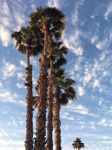 Oasis in Mesa, AZ!