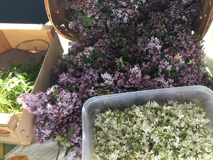 All the Lilac Flowers
