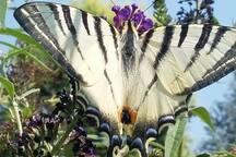 Batterfly in The garden