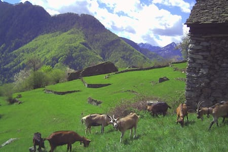Scinghiöra-Agri 1-Rustico-Monti - Brontallo - Haus