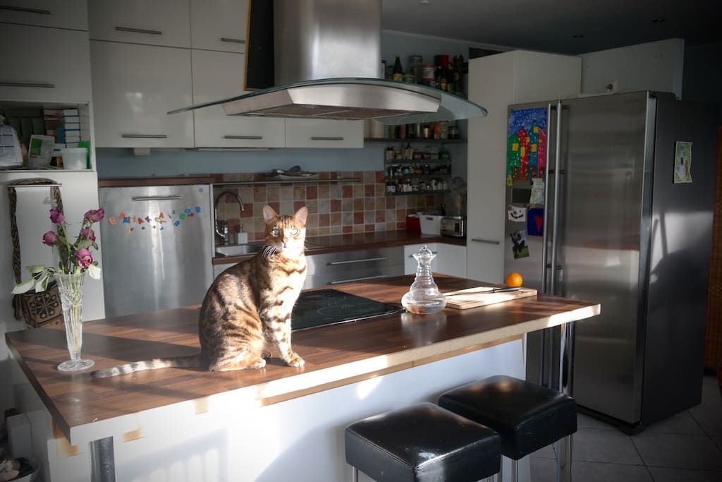 Kitchen and the kitty