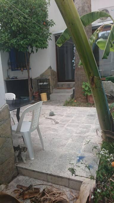 Secret garden with 3 kittens,jasmine,banana,orange and palm tree