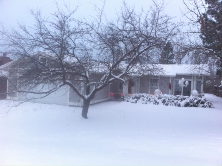 Front Yard in the Winter