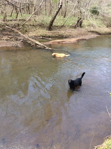 dogs in the creek