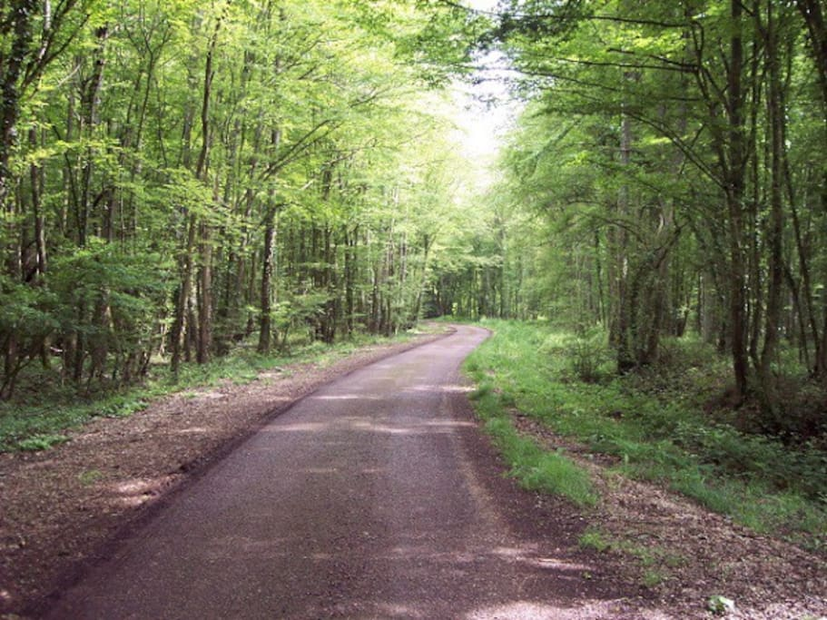 balade en Forêt d'Orient