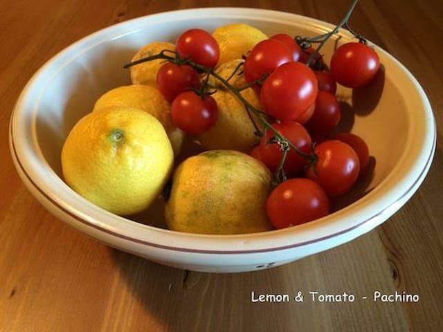 Lemon - camera singola - verde oliva - Pachino - Apartment