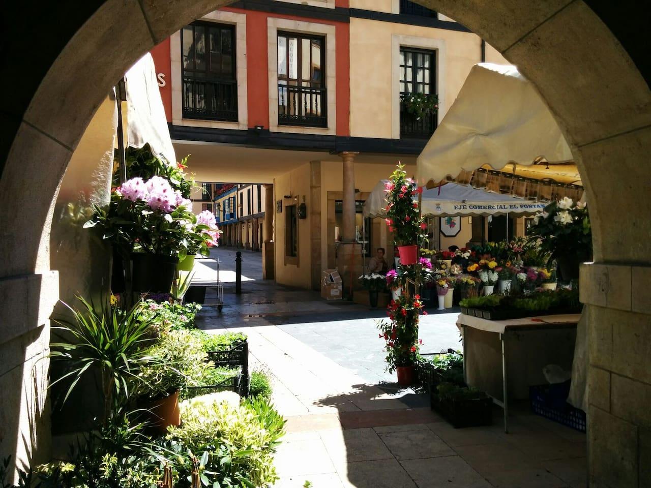 Entrance to the building among flowers. La entrada del edificio entre flores.