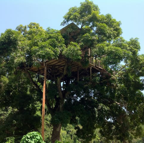 Gingerbread Tree House In the Sky- Nature in Sync.