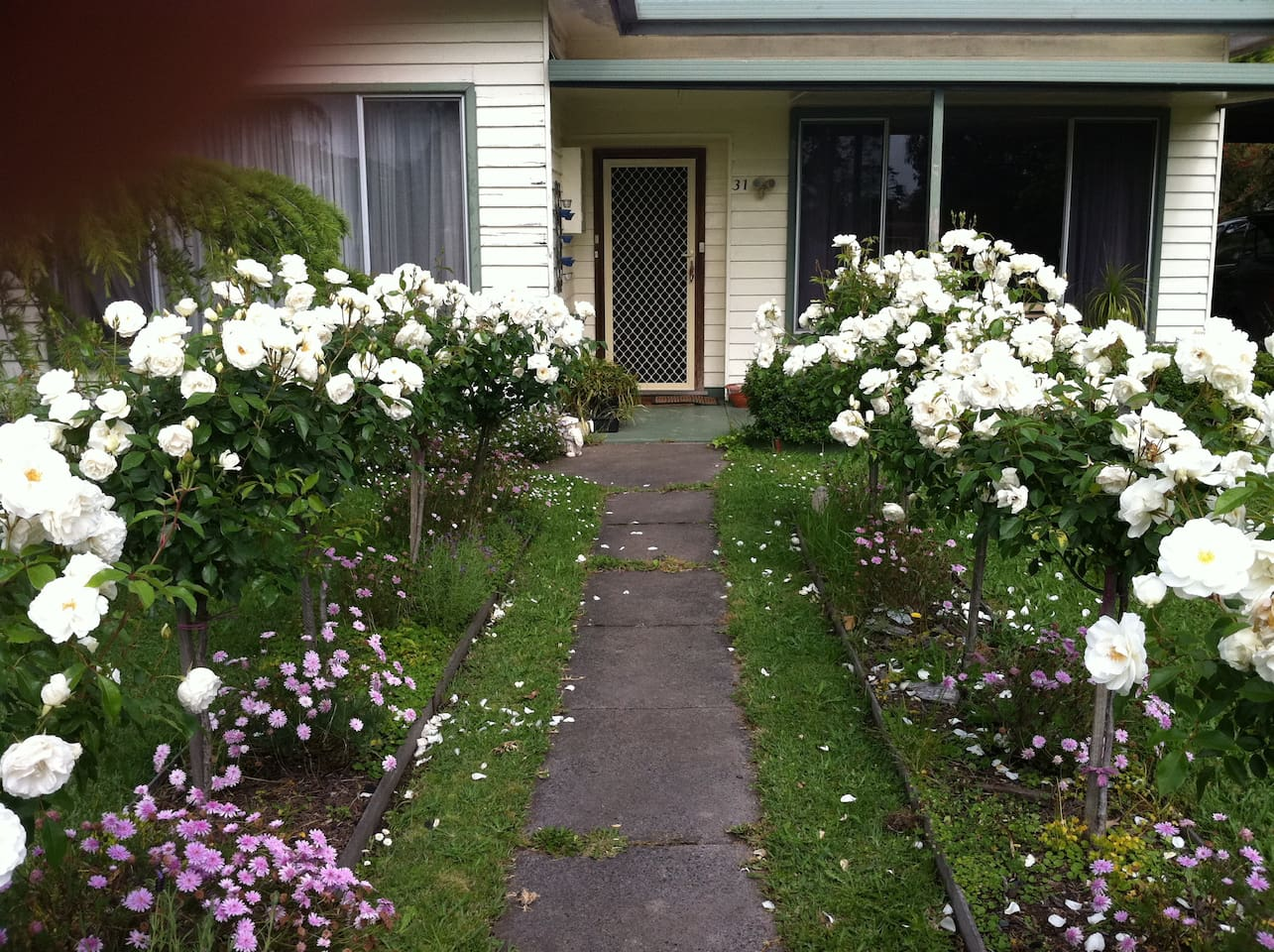 Welcome! Walk up the path between the roses and you will love the experience!