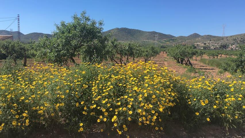 Mountain View Casa, Las Palas,Murcia - Las Palas - Departamento