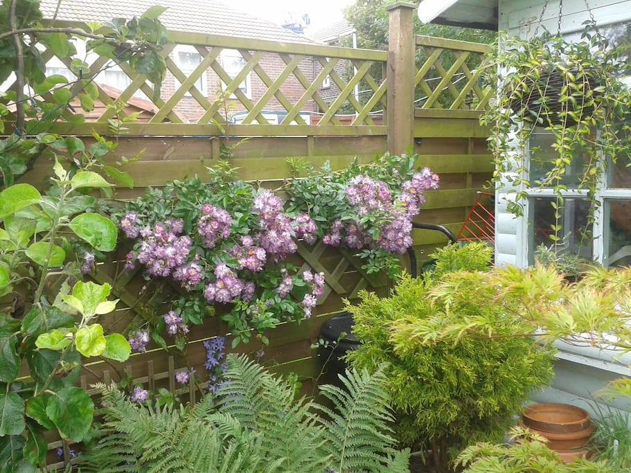 Roses abound in summertime and the little garden summerhouse is relaxing