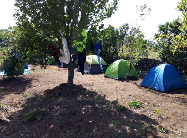 greenteahills  : Camping  in vagamon ,urumbikkara