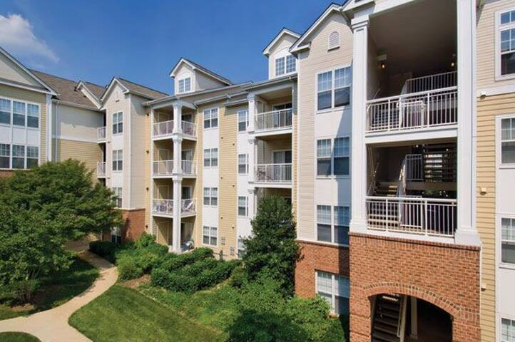 Large Furnished Apartment in Springfield VA - Springfield
