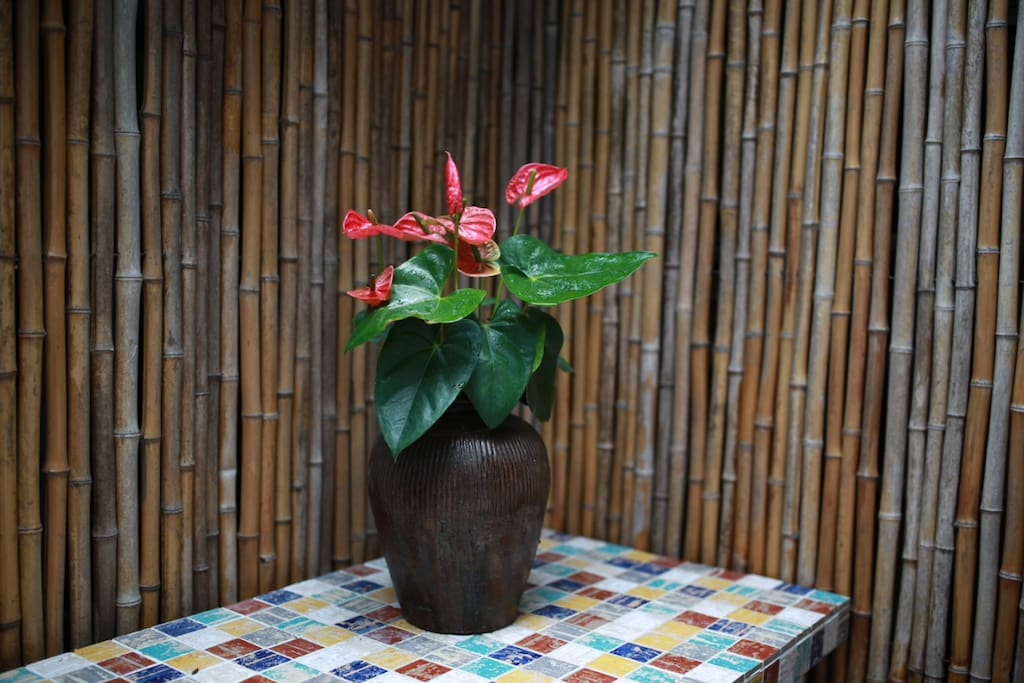 1#家庭房小院内的花