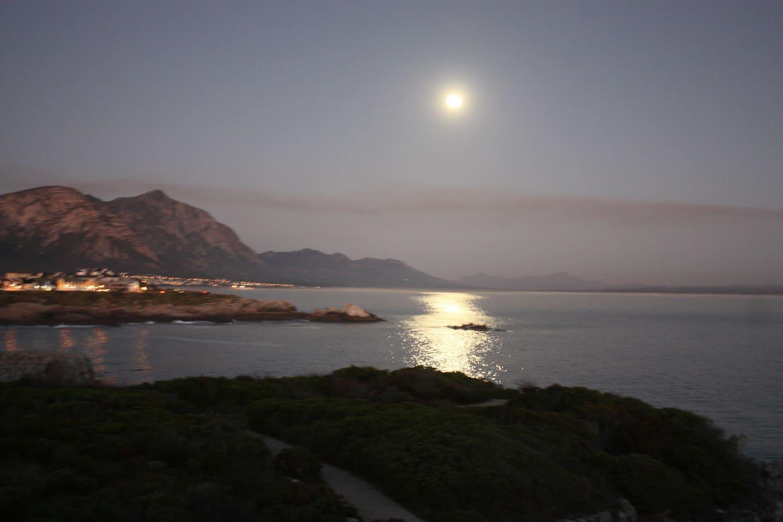 Moonlight in February