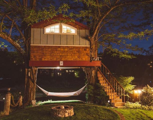 Evening at the tree house