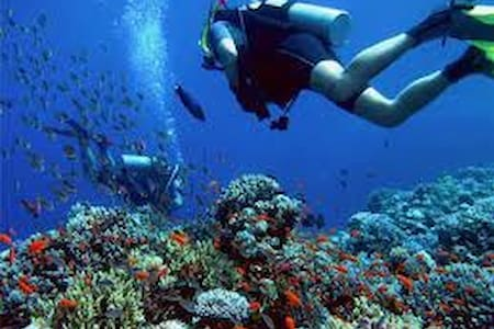 "Dive And See,,,,  Red Sea,,,""Dahab"" - Qesm Sharm Ash Sheikh - Bed & Breakfast"