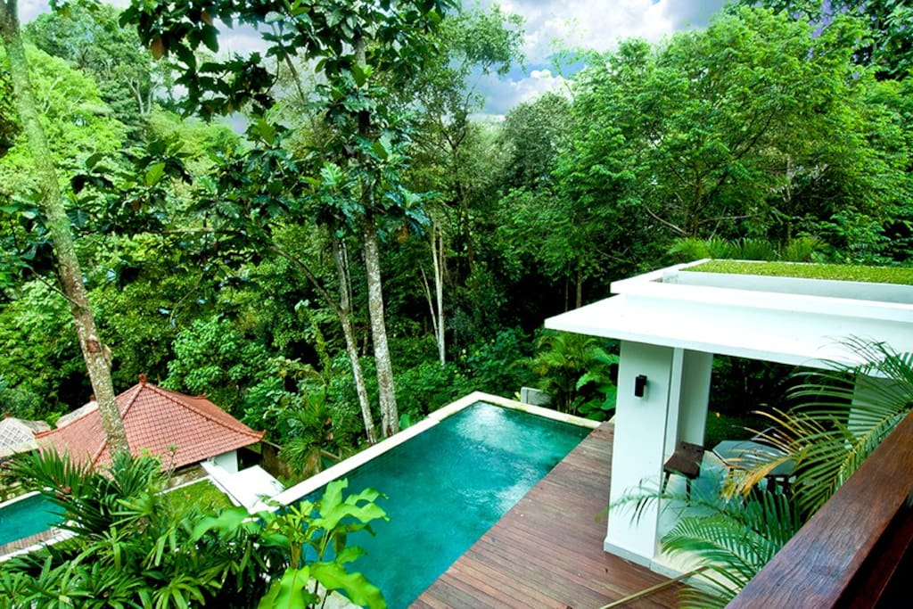 View from the balcony, the 1 bed room private pool with eco surroundings