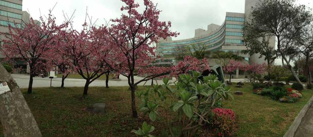 櫻花樹下 - Zhudong Township - Sátor