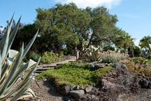 The succulent gardens.