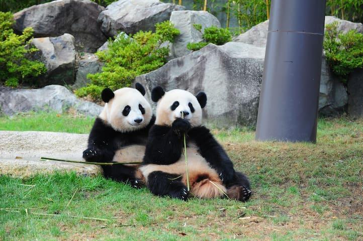 アドベンチャーワールドには徒歩7分~10分ほど!全国的に有名な可愛らしいパンダたちに会えますよ!/Adventure World, a wildlife park, is also nearby and is famous for its pandas which are known as mascots of the town. (7 to 10 min walk from the listing)