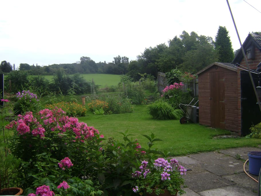 the back garden in late summer