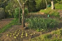 Our organic vegetable garden